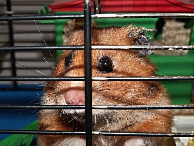 Do Hamsters Like Being Held?