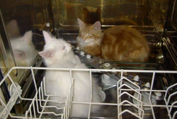 Cat-proof your home: cats in dishwasher
