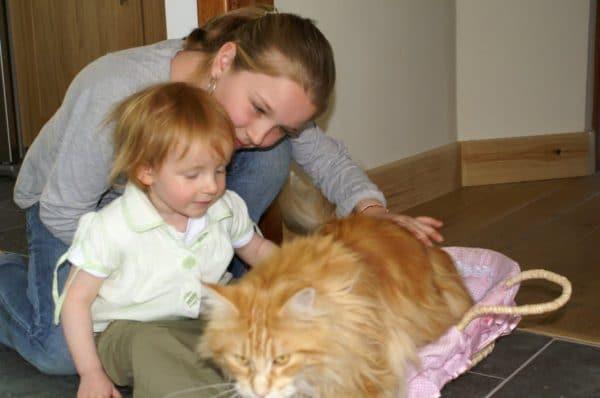 Cat with children