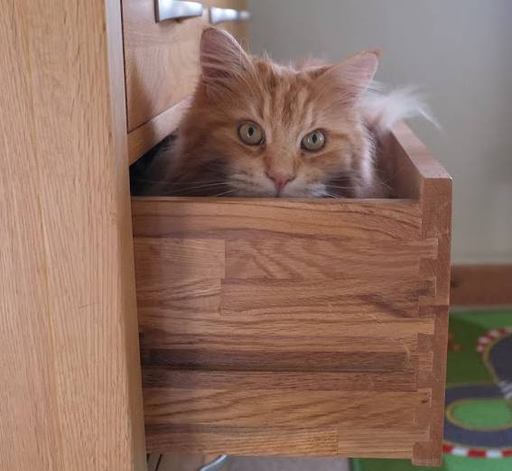 Cat in drawer