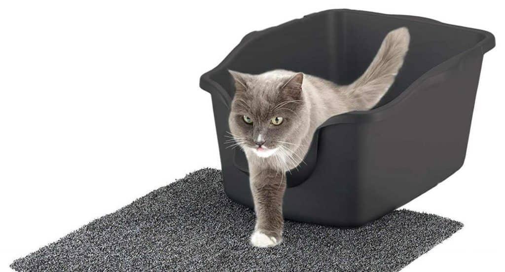 Do Maine Coon cats use a litter box? High-sided litter box