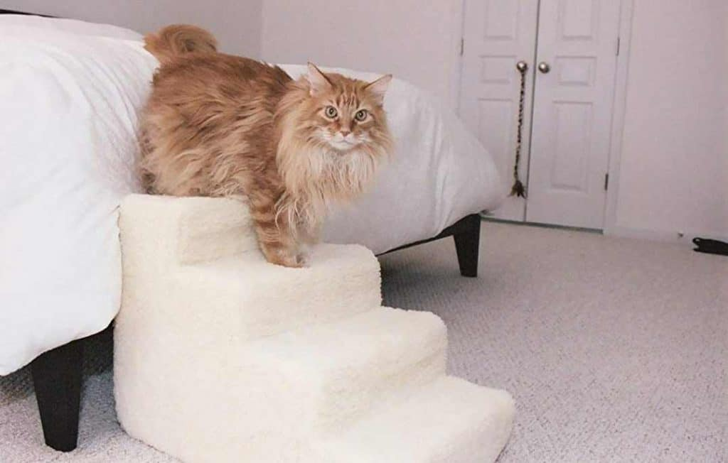 18 ways to spoil your maine coon cat