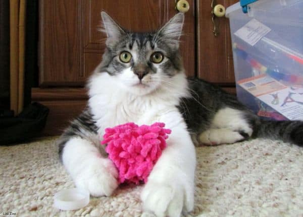 22 Products Your Maine Coon Must Have