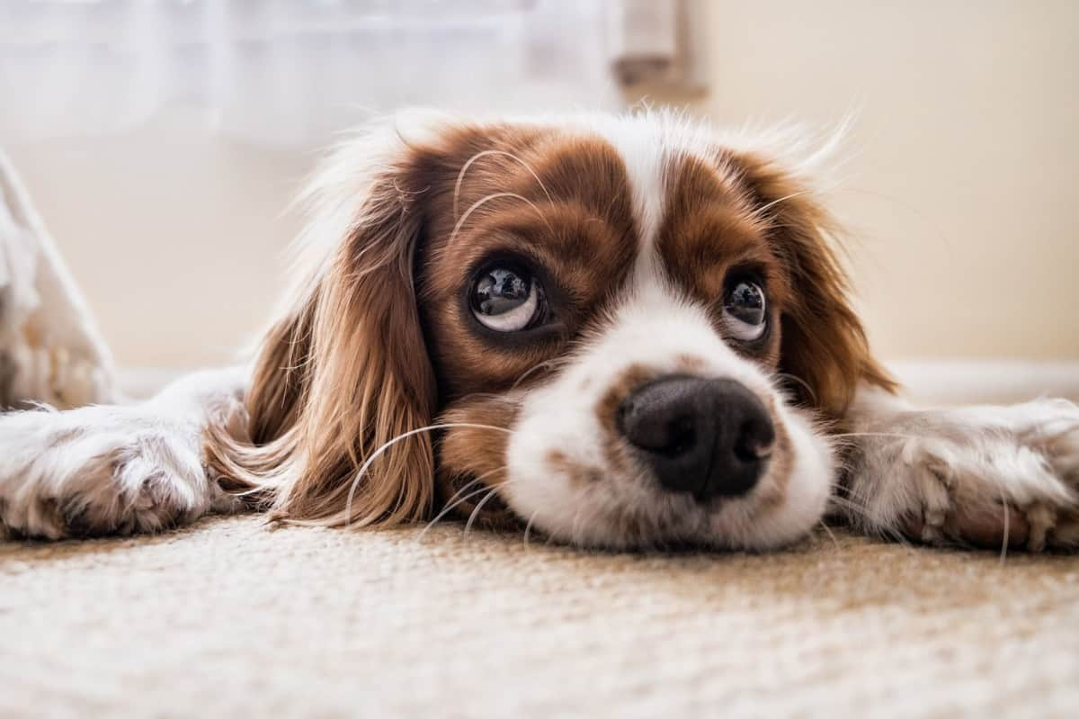 Signs That Your Dog Might Be Stressed