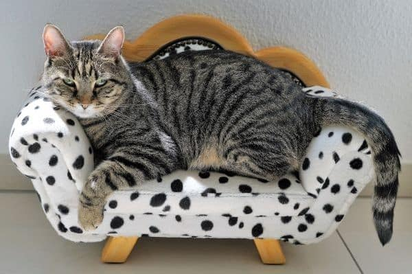 Tabby cat on spotted cat bed