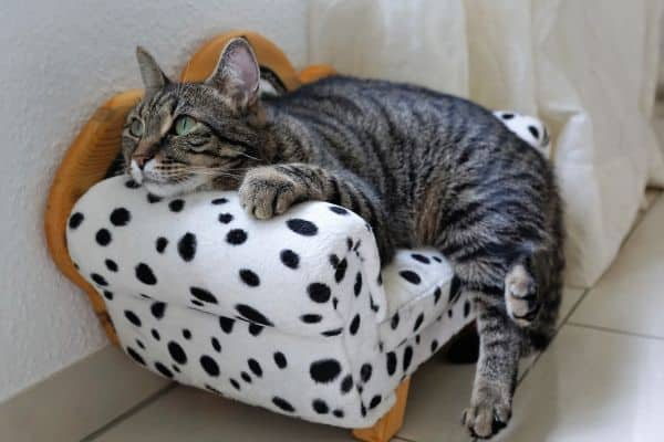 18 Ways To Make Your Cat's Life Amazing