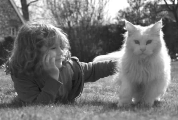Child with white Maine Coon