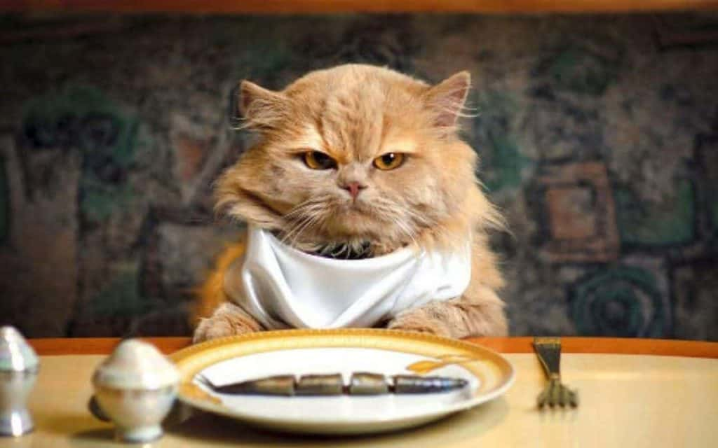 How many pouches should I feed my cat? Cat dining at a table