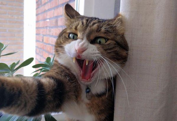 Do cats calm down after being neutered? Cross cat