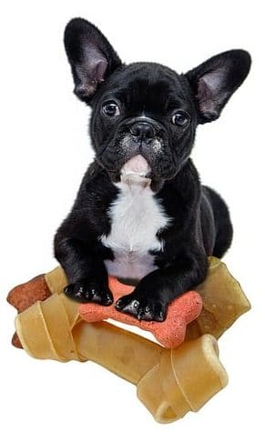 Why Is My French Bulldog Throwing Up?