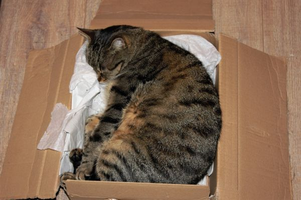 Why Do Cats Like Boxes? The perfect box bed