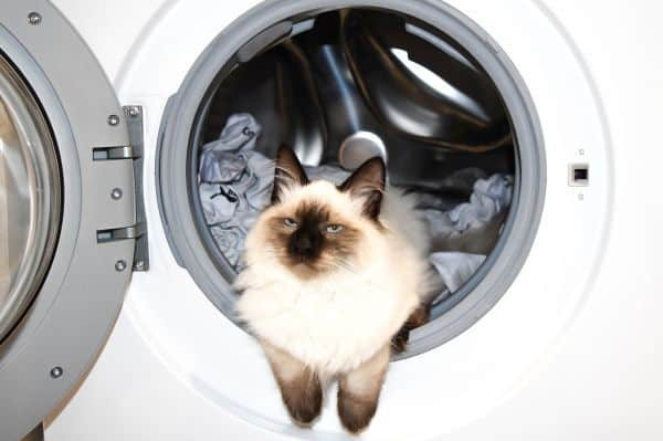 cat-proof your home: cat in washing machine