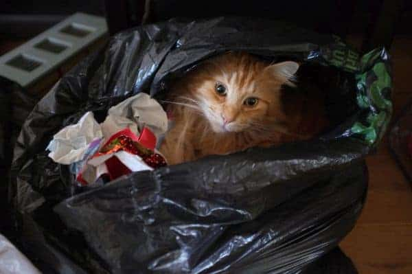 Cat in black garbage sack