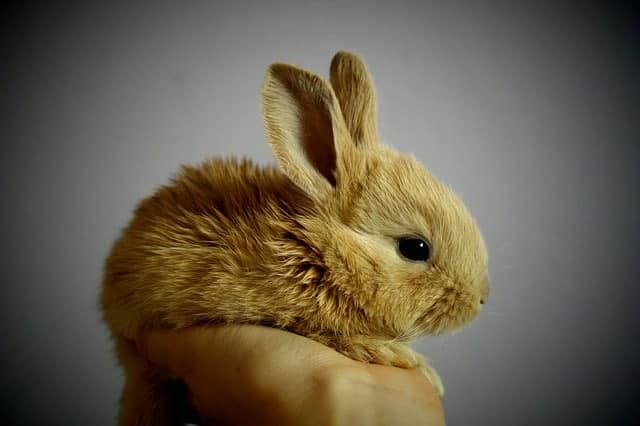 How Can I Make My Rabbit Happy?