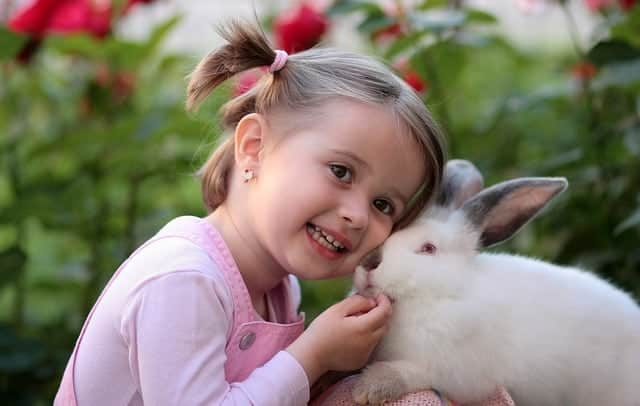 Why does my rabbit lick me? Rabbit with young girl