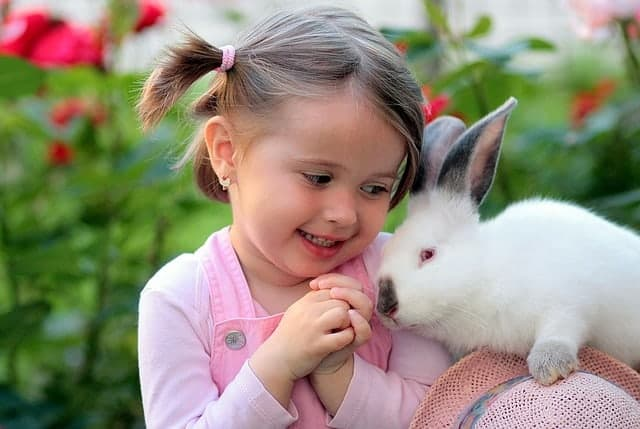 Rabbit with young girl