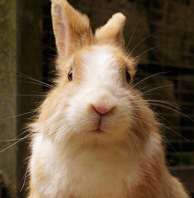 Rabbit face staring at camera