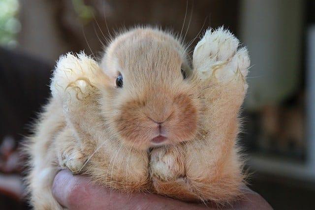 Rabbit looking through its back legs
