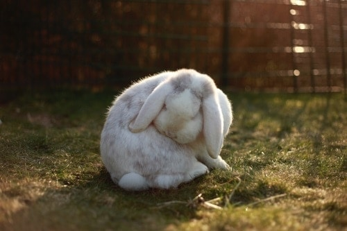 Questions About Rabbits