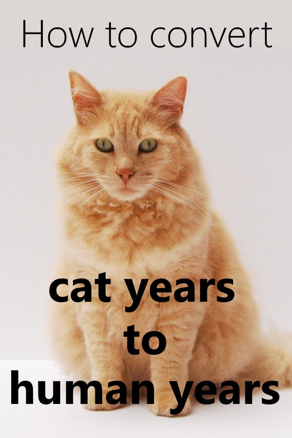 Convert Cat Years To Human Years