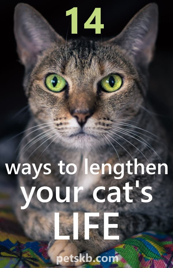 How to lengthen your cat's life