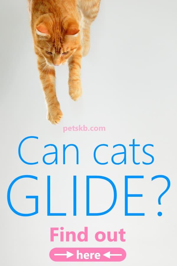 Cat gliding