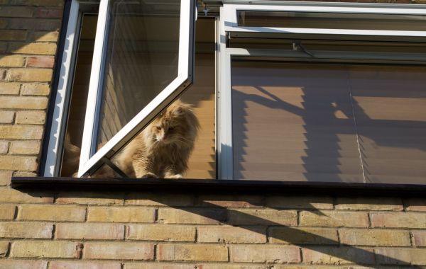 Cat looking down from open window