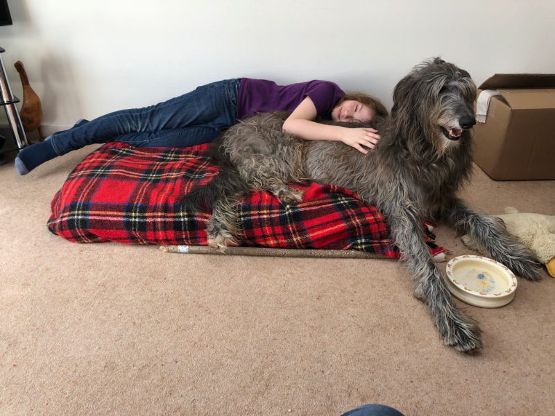 What Does a Scottish Deerhound look like?