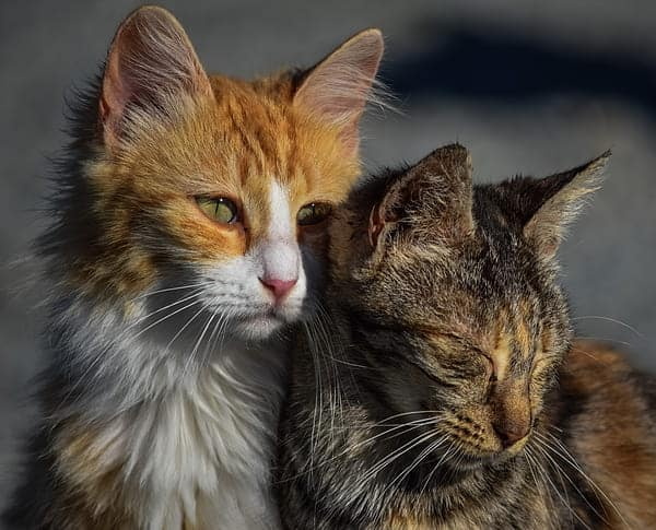 Do cats cry? Two sad cats