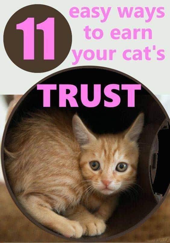 How to gain a cat's trust