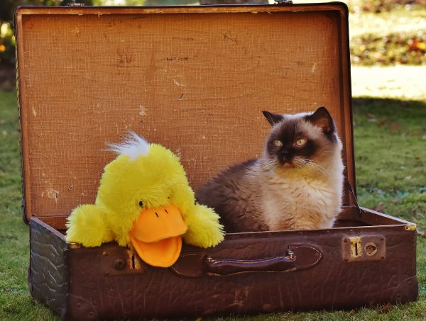 Do Ragdoll cats drool? In suitcase