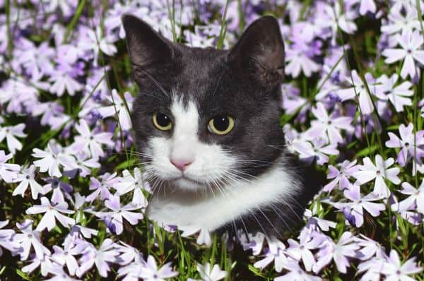 Cat drooling: cat in flowers