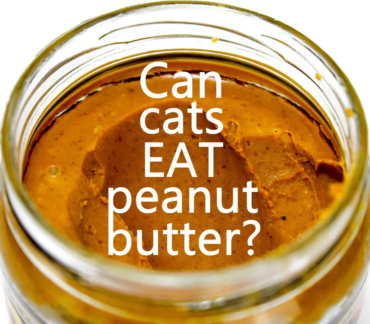 Can cats eat peanut butter like this?