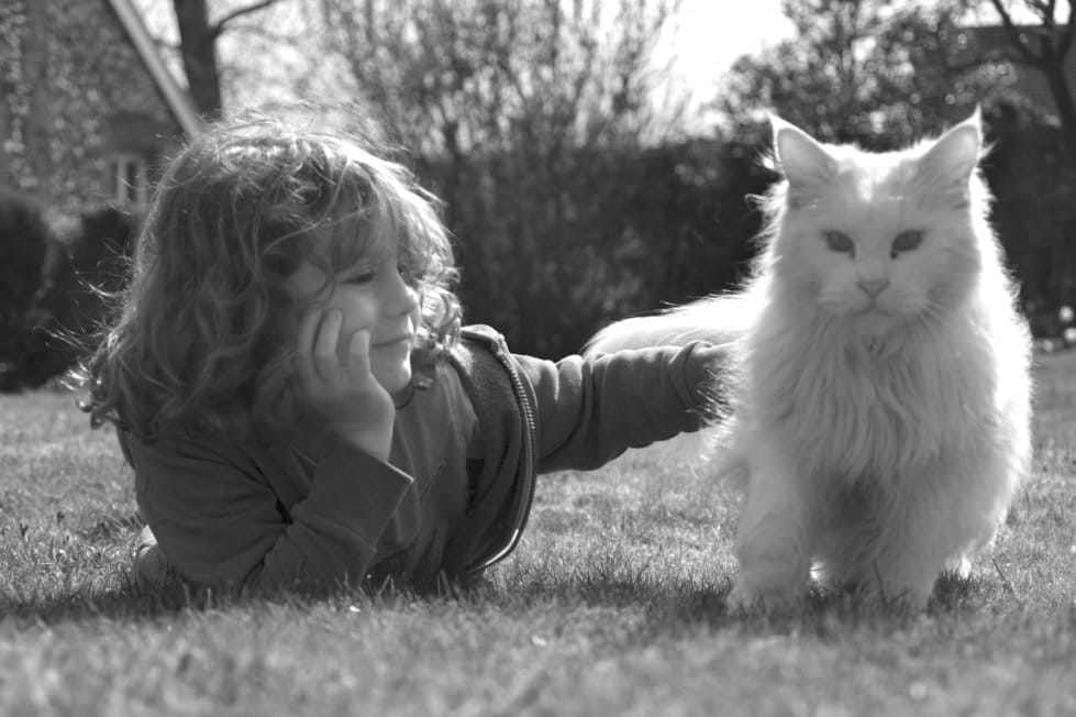 are maine coons good with babies and children