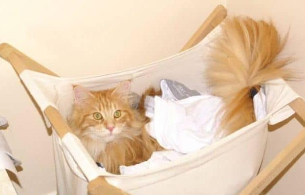 Cat in the washing