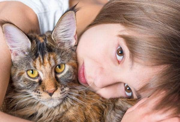 Where to find free Maine coon kittens: Maine Coon kitten with little girl