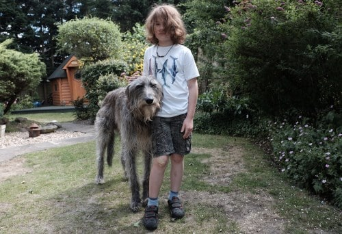 Are Maine Coons good with Dogs (Deerhound)