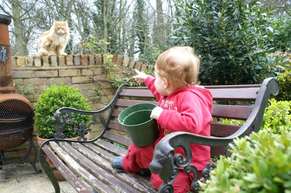 What is the personality of a Maine Coon Cat? Baby pointing at Maine Coon