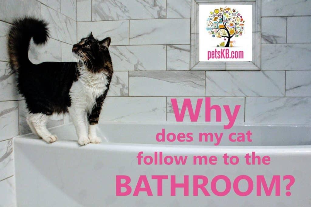 A cat on the edge of a bathtub