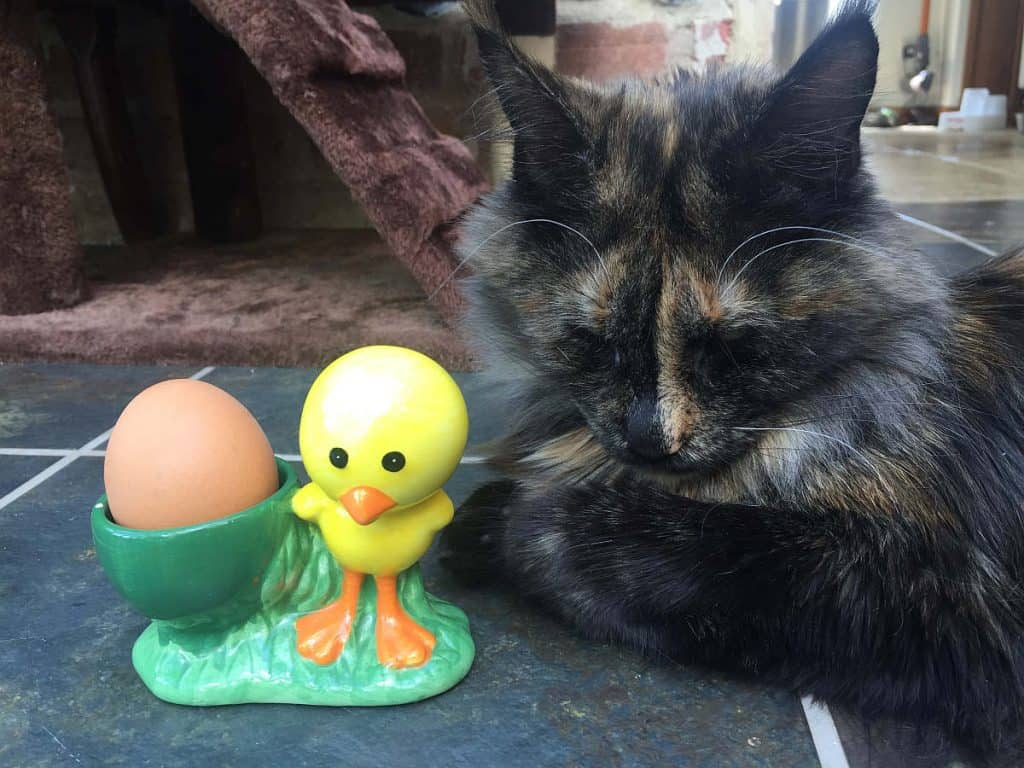 Cat with an egg