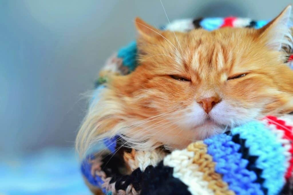 Cat in a knitted scarf
