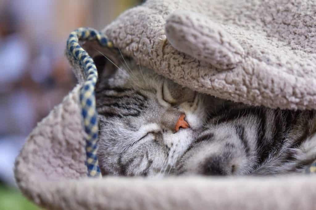 Cat in a fleecy sleep suit