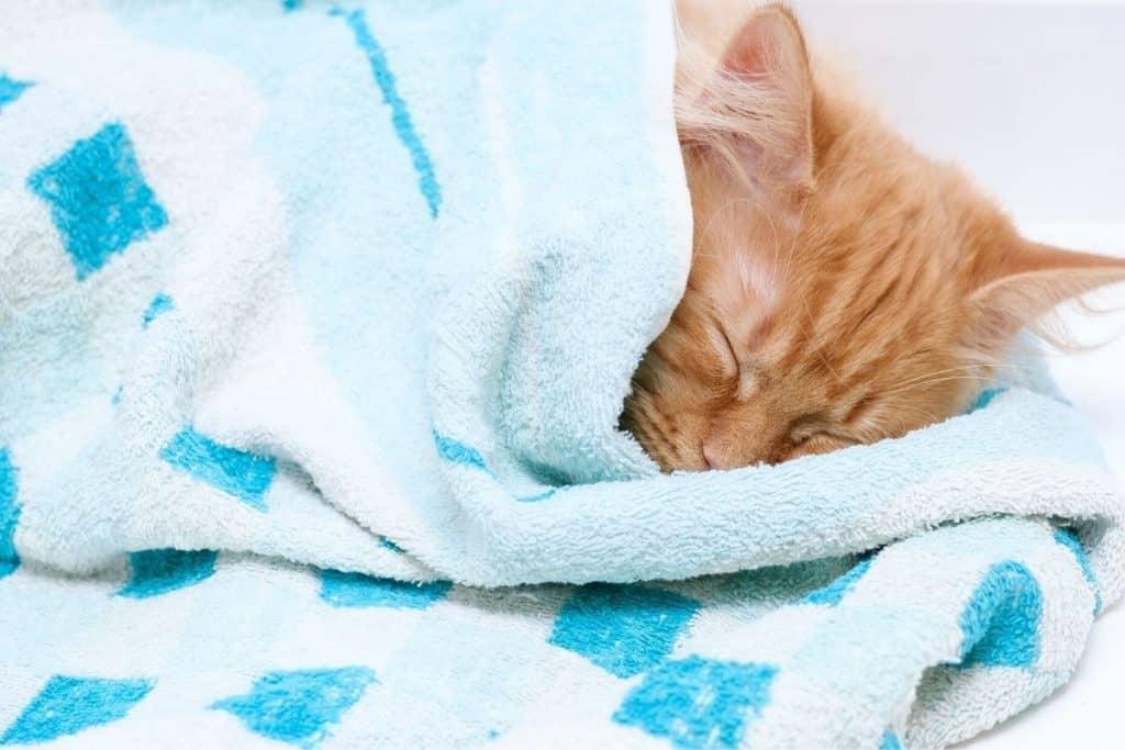 Cat asleep in a towel