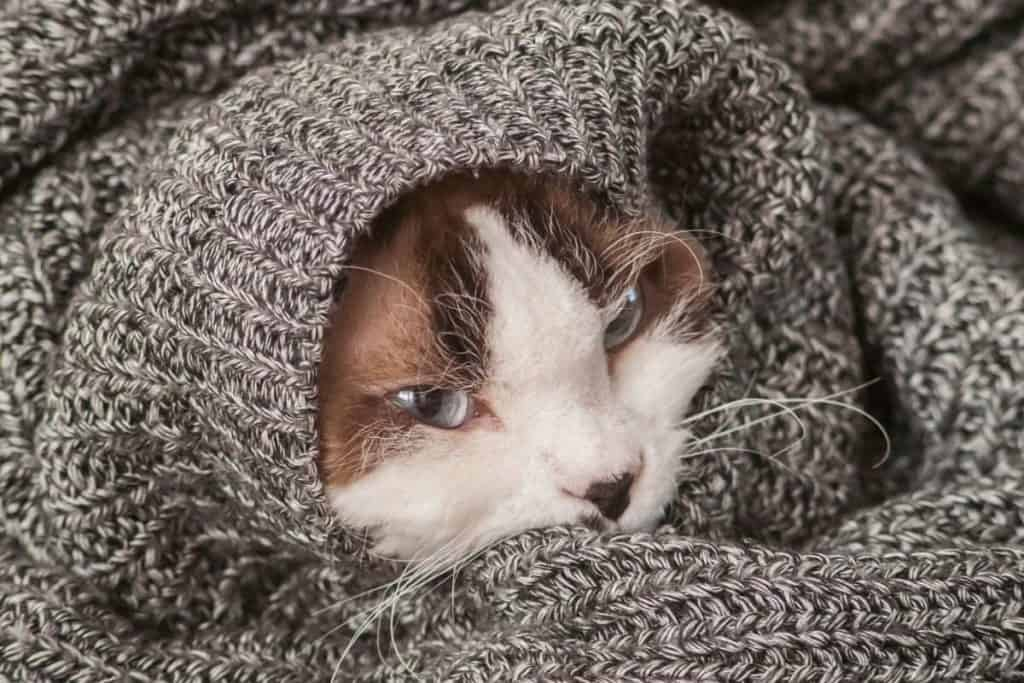 cat in a jumper