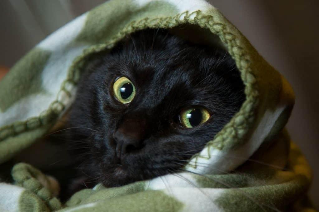Cat in a green fleece blanket