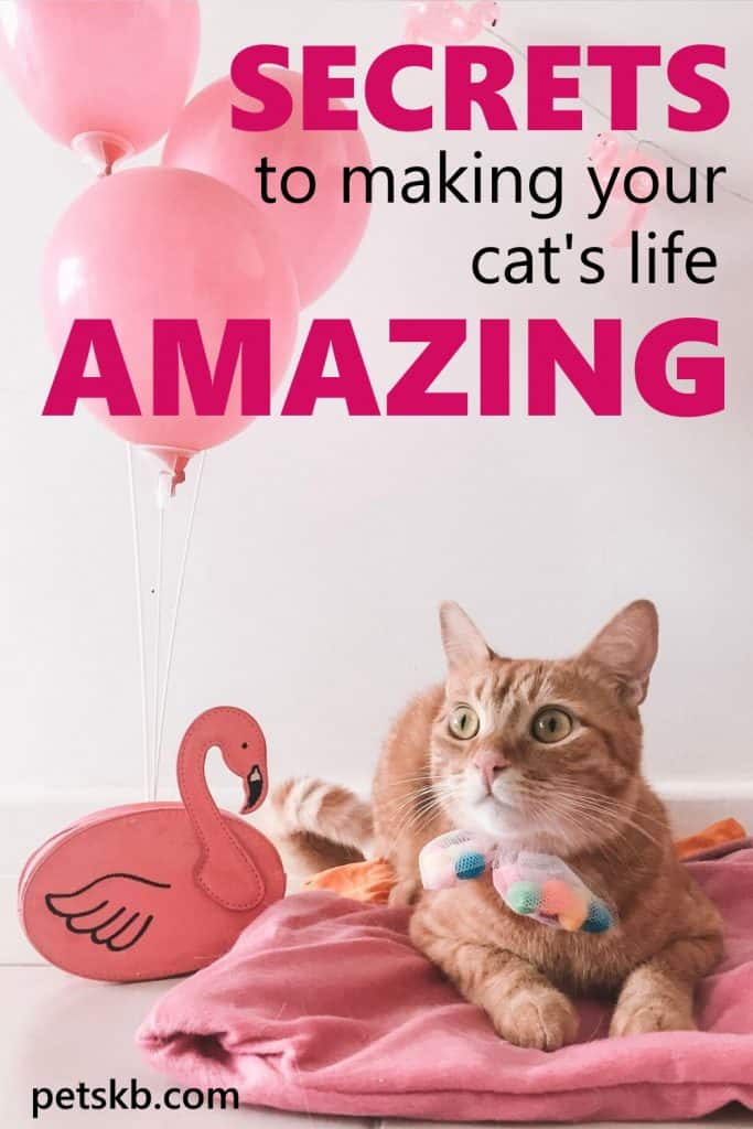 How to make your cat's life amazing