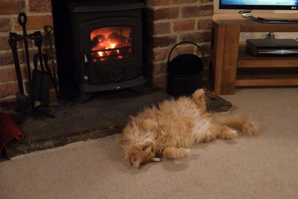 Maine Coon by fire.