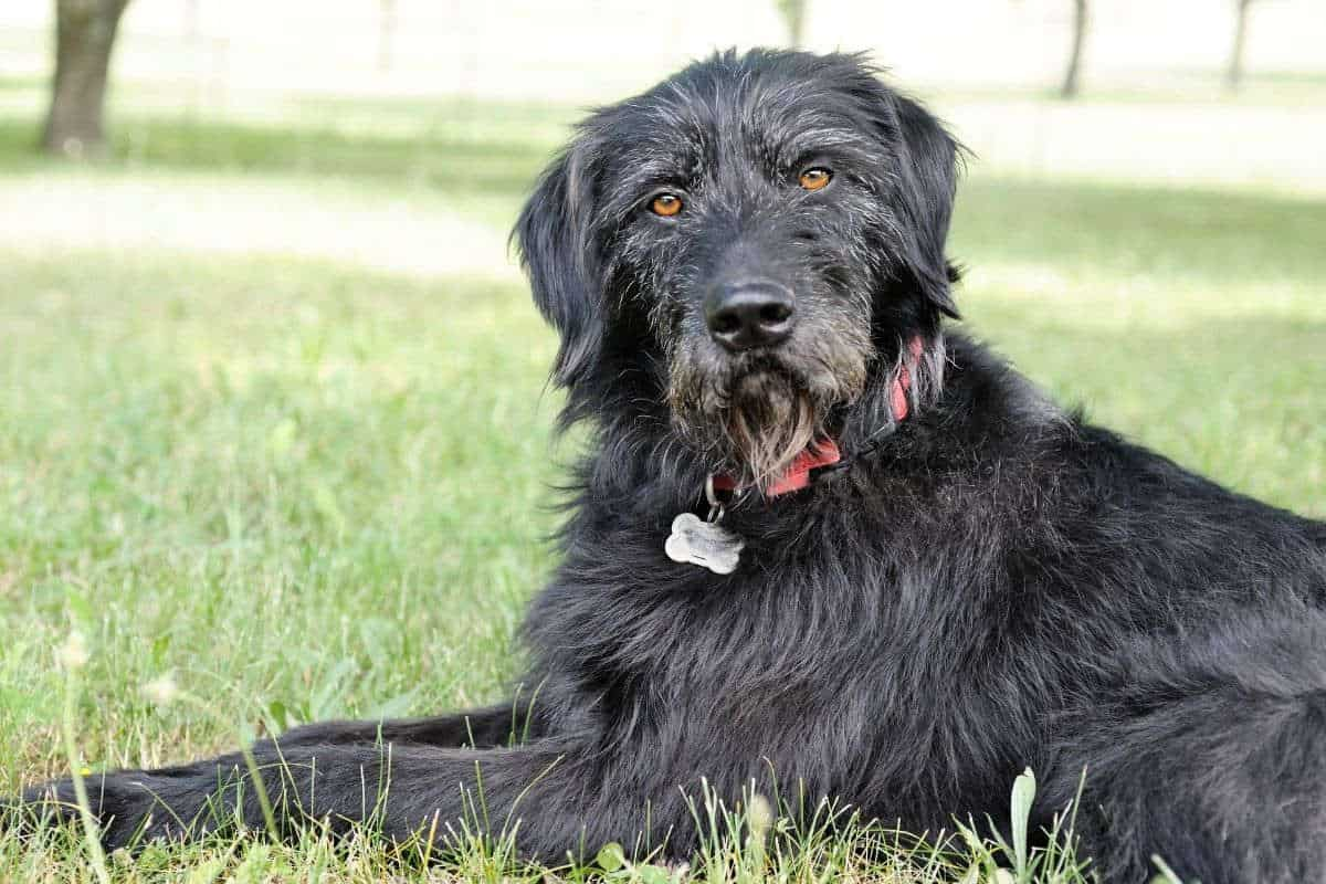 Thing your dog hates: black dog looking cross
