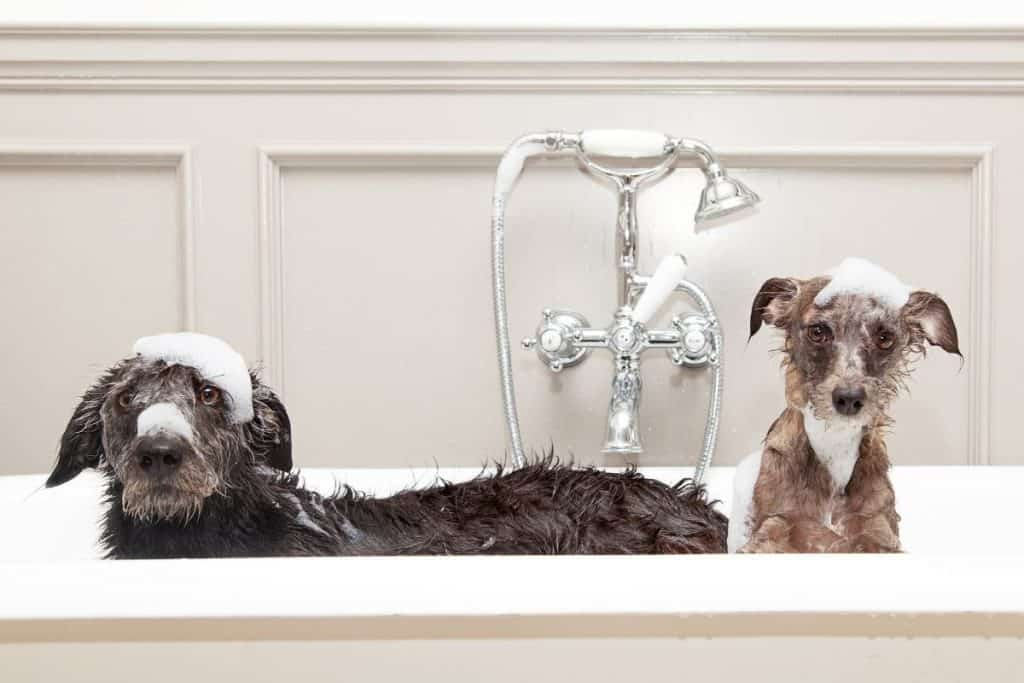 Things dogs hate: 2 dogs not enjoying a bath