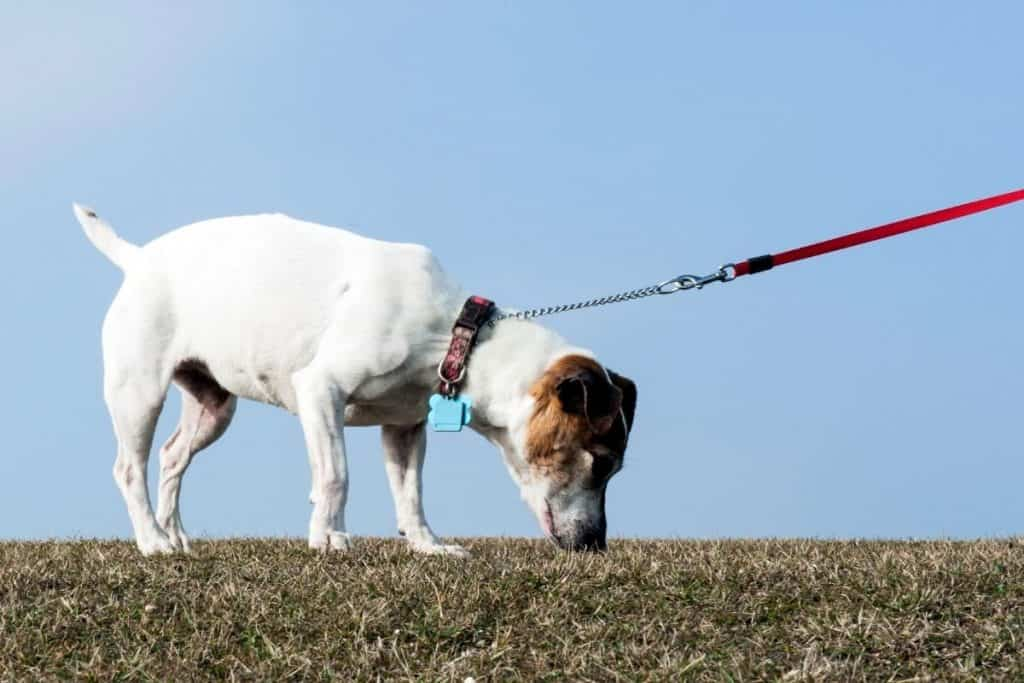 Things dogs hate: A dog being hurried on its walk